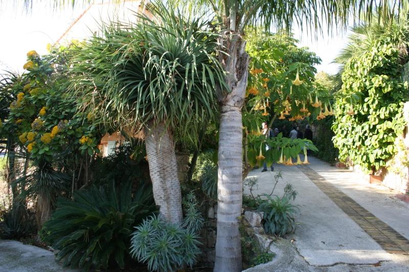 Un jardin extraordinaire près de Cannes Dracae10
