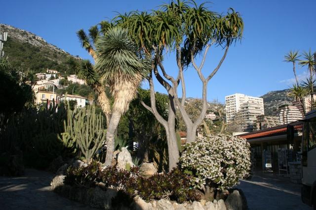 Passage très rapide au Jardin Exotique de Monaco, ce matin Ensemb11