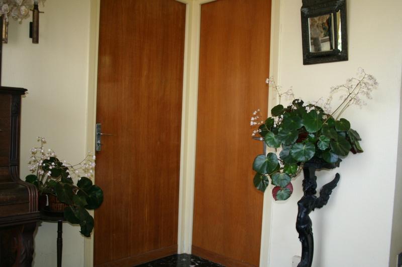 Begonia x erythrophylla dans mon entrée Entrae11