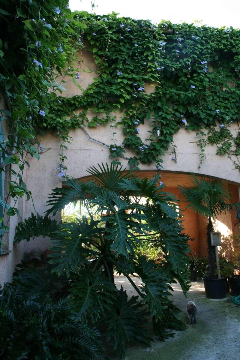 Un jardin extraordinaire près de Cannes Entrae14
