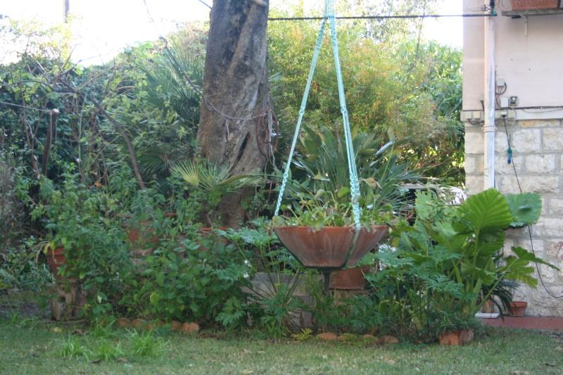 Fin d'année dans mon jardin Entrae15