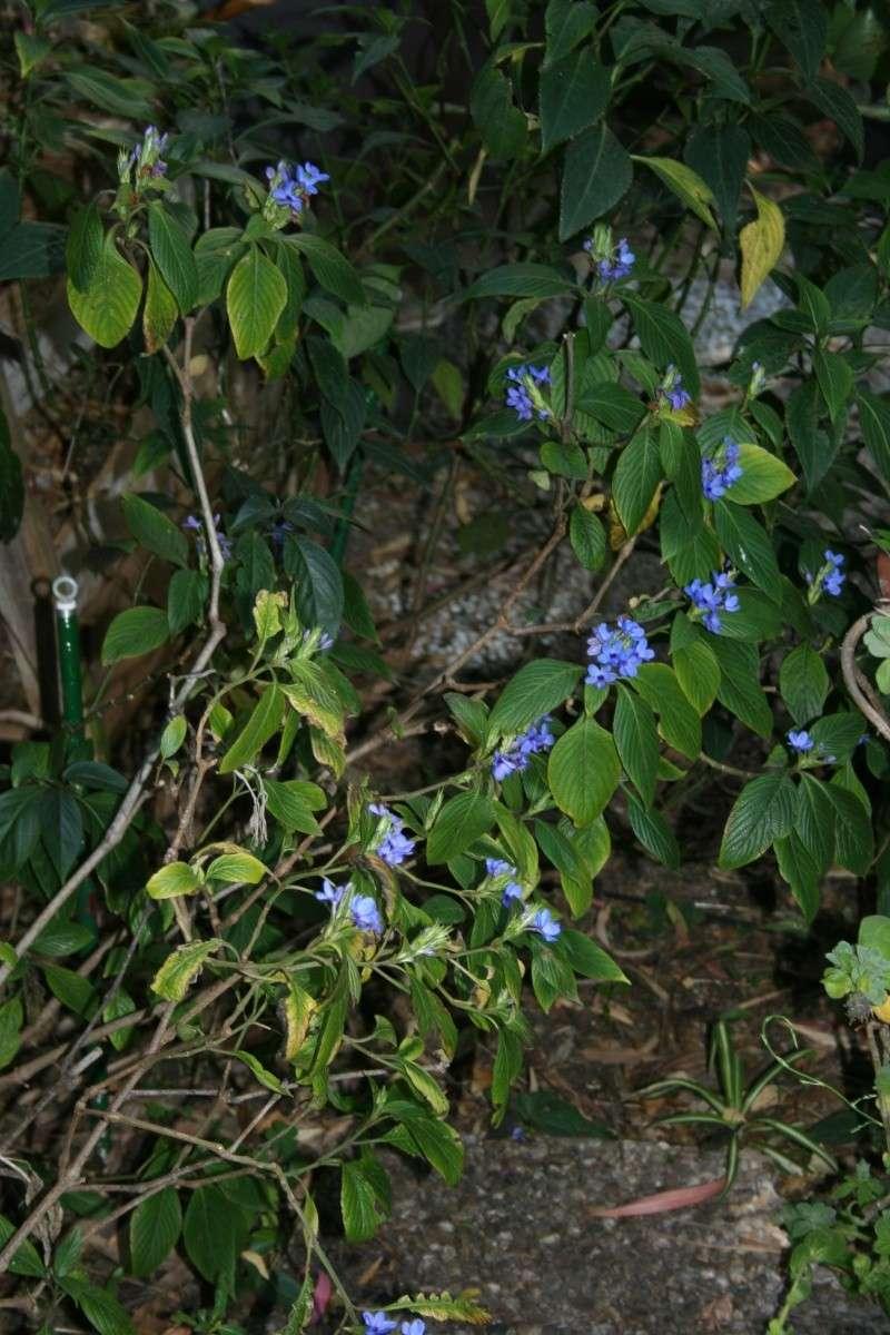 Ca commence, quelques fleurs à voir Eranth14