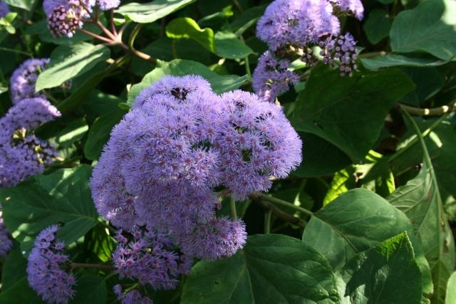 Splendeurs de mon jardin de la mi avril Eupato13