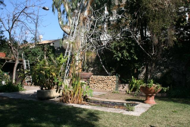La découpe du bois de l'Eucalyptus est finie Fond_d10