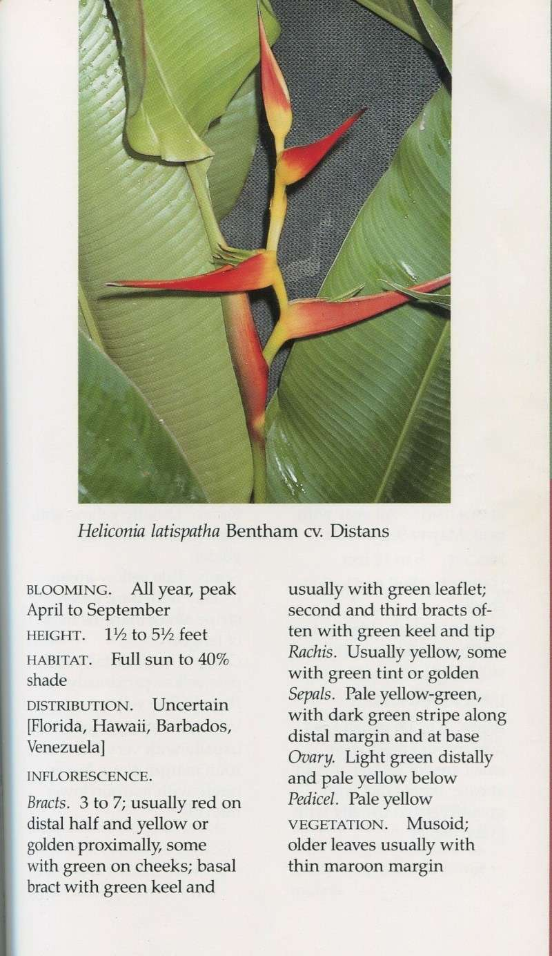 Heliconia dits rustiques, comparaison Helico15