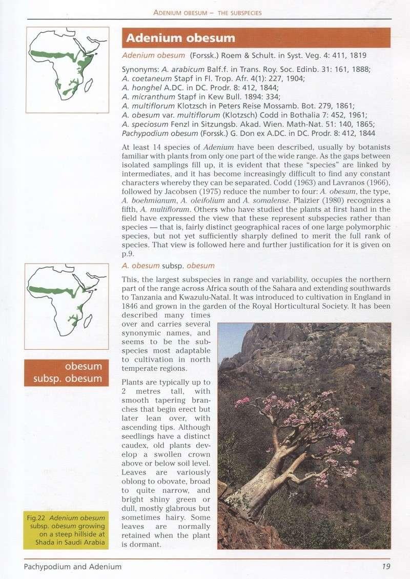 Adenium arabicum Img21210