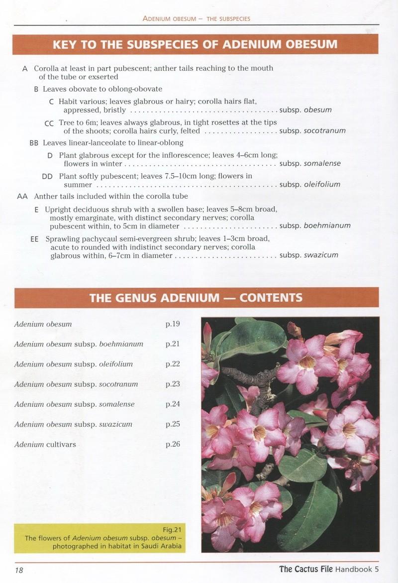 Adenium arabicum Img21310
