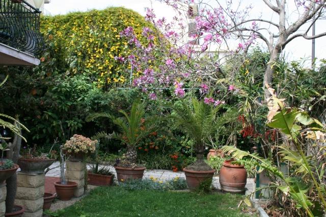 Beautés de la mi mai Jardin11