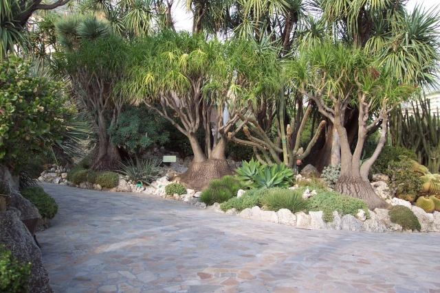 Jardin Exotique de Monaco Je_de_12