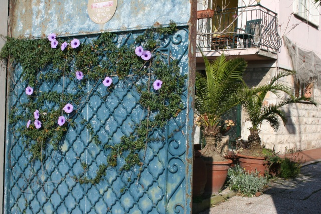 Portail fleuri Portai10
