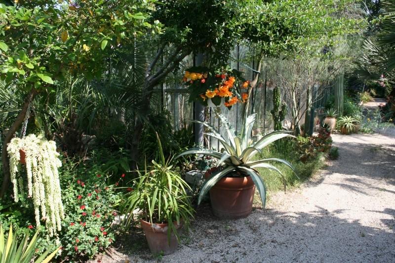 Fabuleux jardin de succulentes près de Toulon Pras_d11