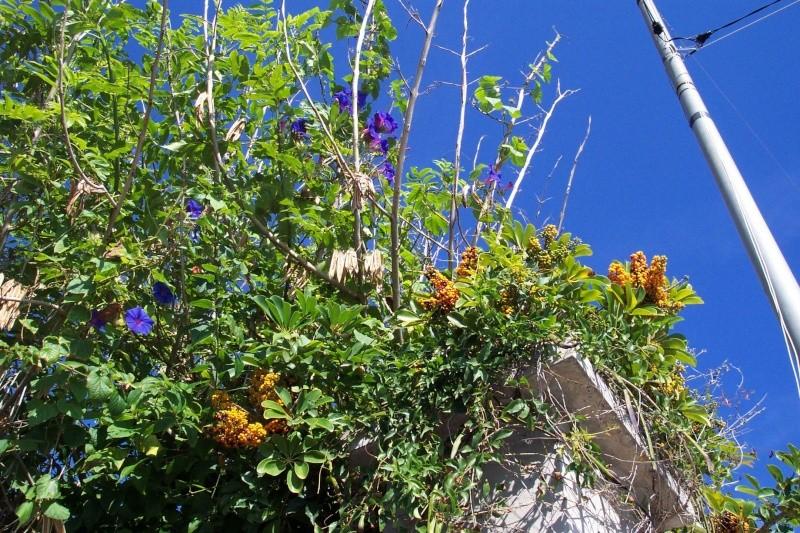 Après les orchidées, les hirondelles, mes plantes d'intérieur.... - Page 6 Scheff12