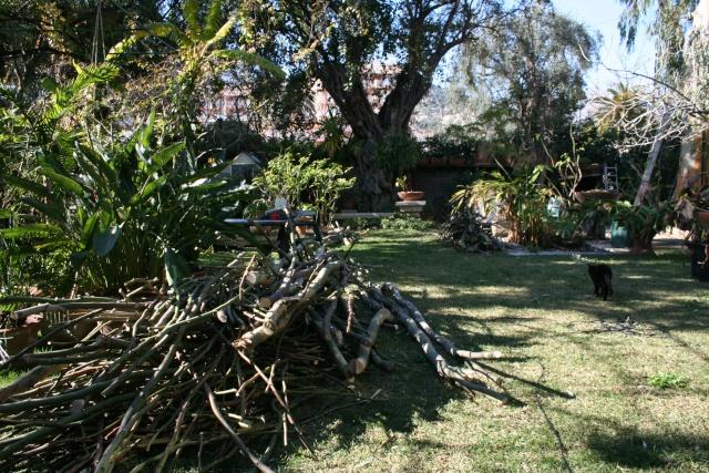 Bois de l'Eucalyptus à débiter et ambiance Tas_de10