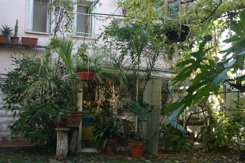 Fin d'année dans mon jardin Varand10