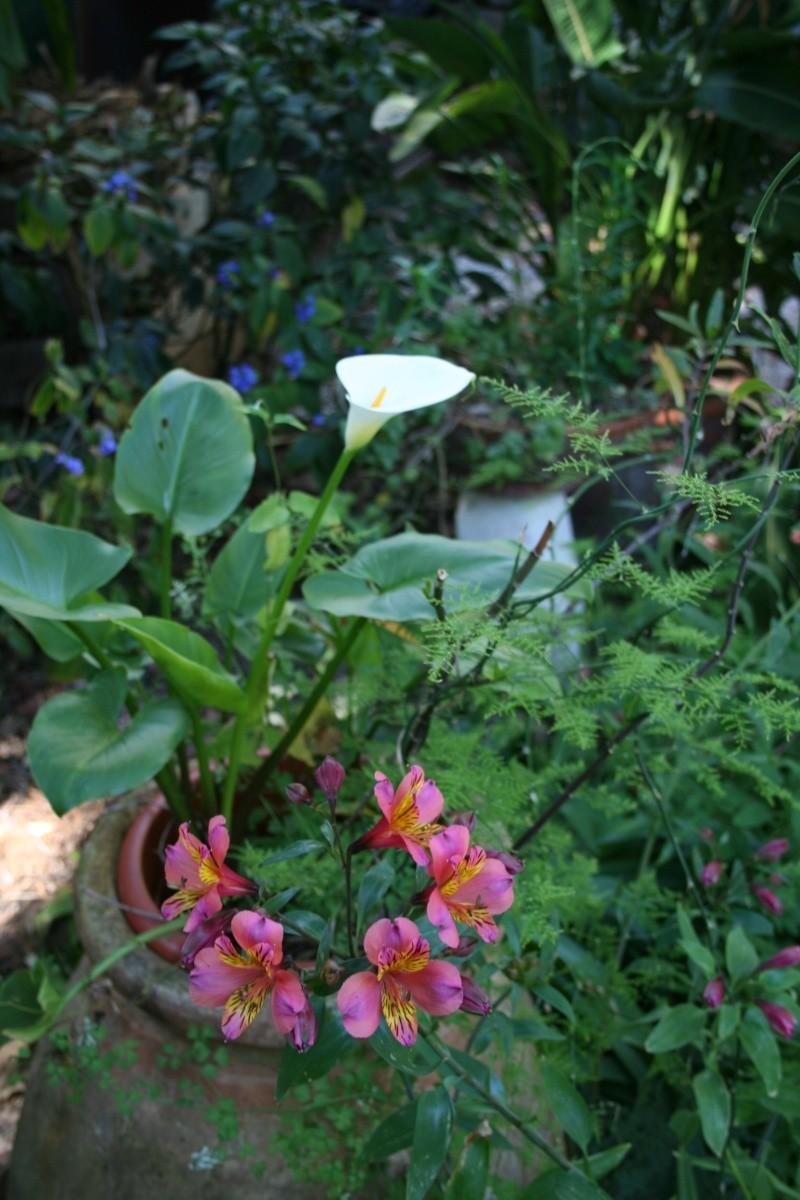 Ca commence, quelques fleurs à voir Zanted10