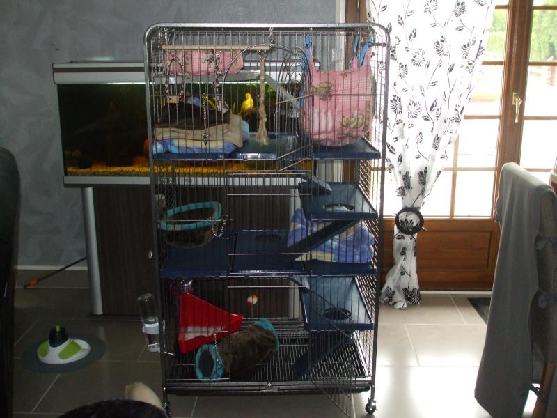 Les cages de mes bébés Dscf4922