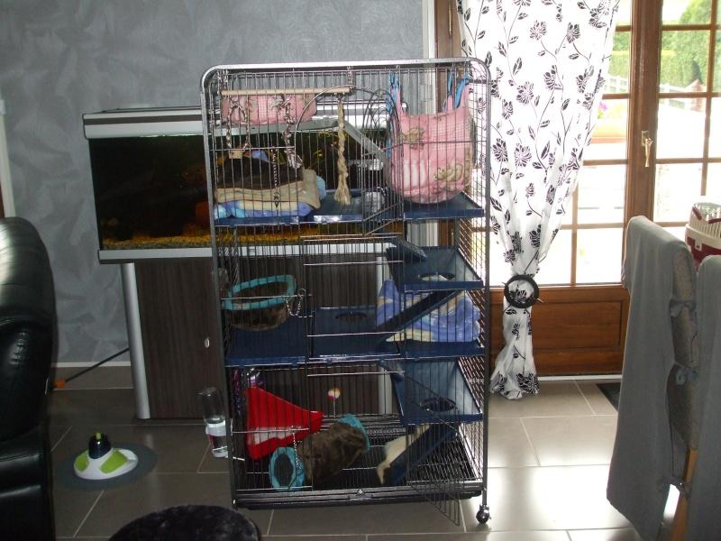 Les cages de mes bébés Dscf4923