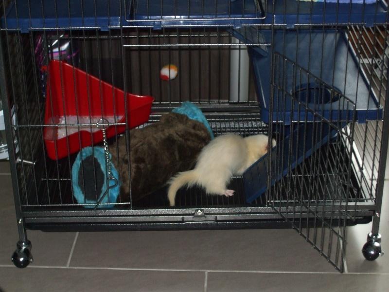 Les cages de mes bébés Dscf4924