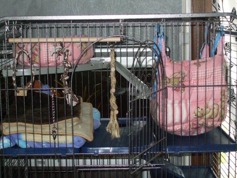 Les cages de mes bébés Dscf4925