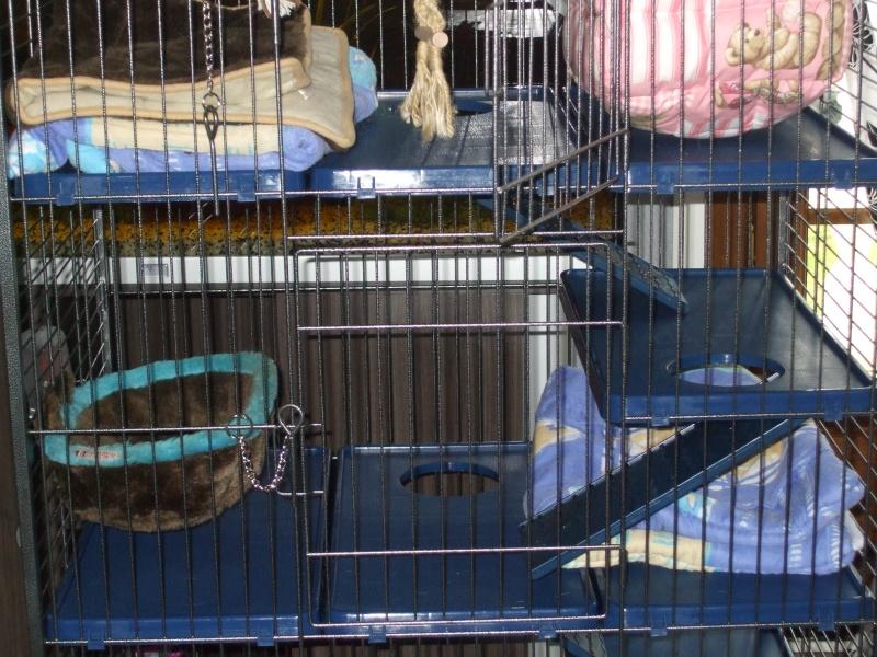 Les cages de mes bébés Dscf4926