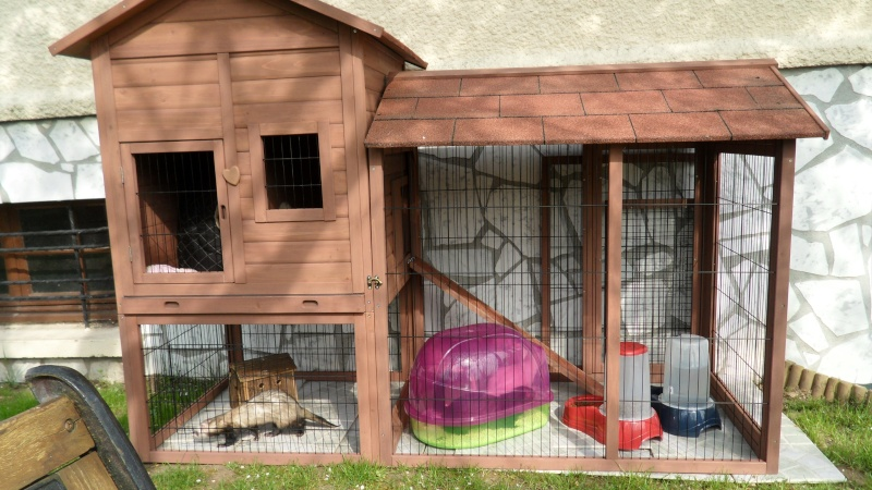 Les cages de mes bébés Sam_1818