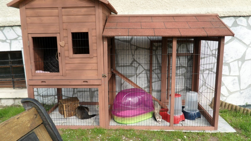 Les cages de mes bébés Sam_1819