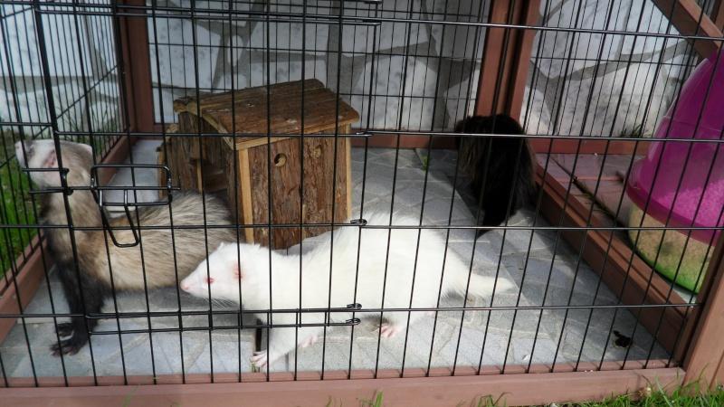 Les cages de mes bébés Sam_1820