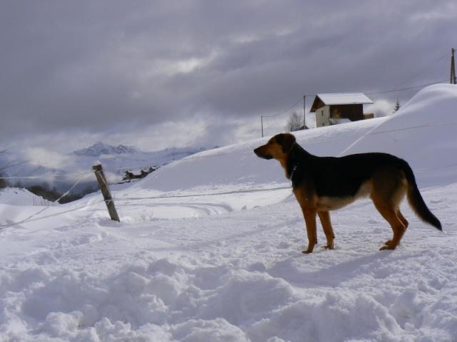 perdu  un chien P1040610