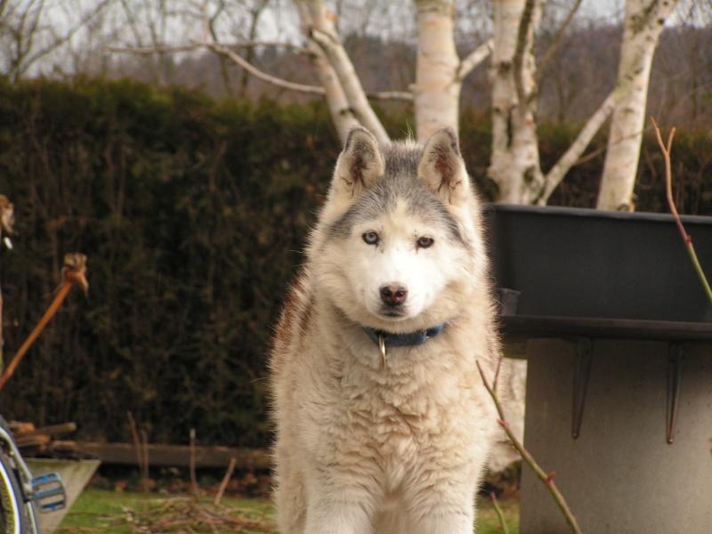 hommage au vieux loups 01_02_10