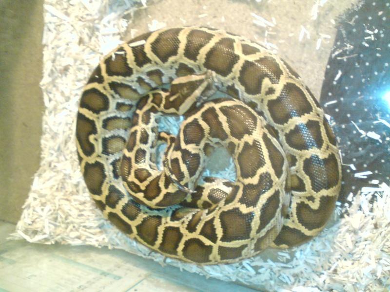 post question python molure Dsc00610