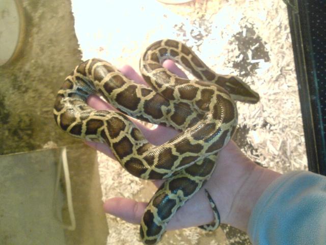post question python molure Dsc00612
