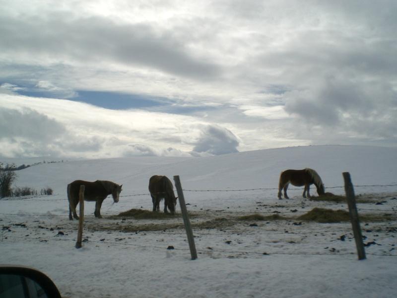 Février sous la neige à Allanche Cimg6217