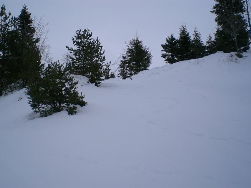 Février sous la neige à Allanche Cimg6312