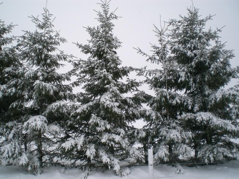 Février sous la neige à Allanche Cimg6338