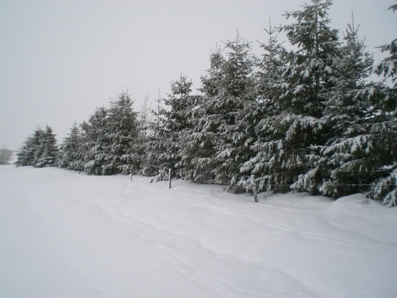 Février sous la neige à Allanche Cimg6339