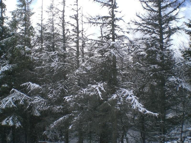 Février sous la neige à Allanche - Page 2 Cimg6420