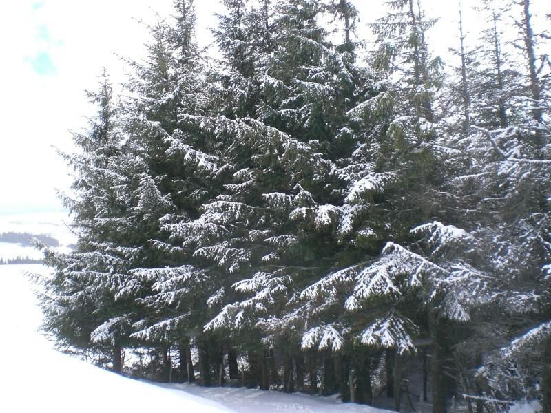 Février sous la neige à Allanche - Page 2 Cimg6421