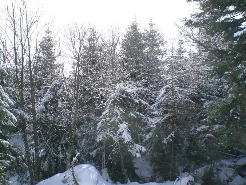 Février sous la neige à Allanche - Page 2 Cimg6422