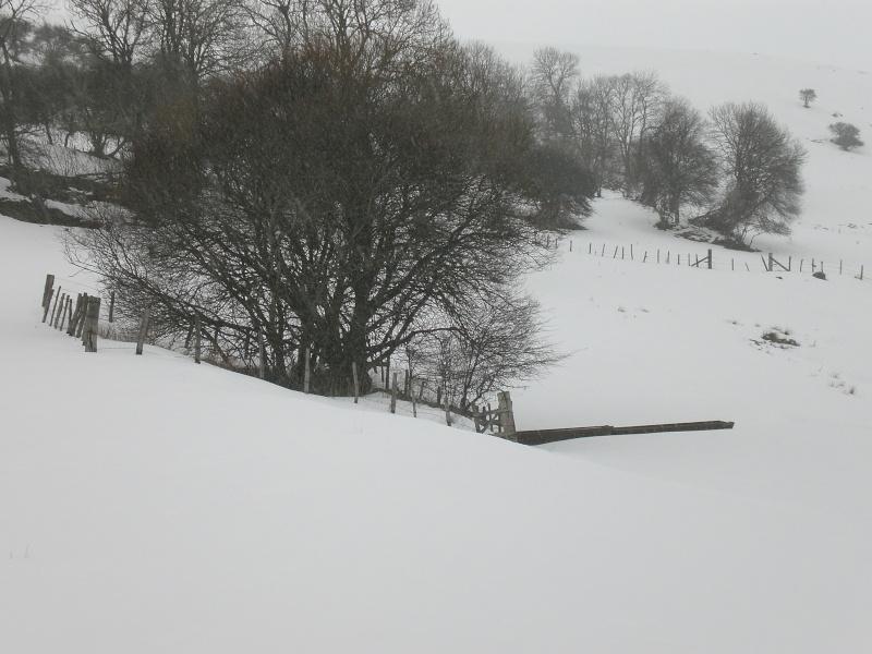 Février sous la neige à Allanche - Page 2 Cimg6425