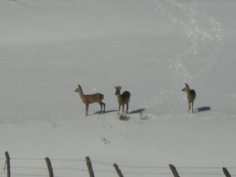 Février sous la neige à Allanche - Page 2 Cimg6434