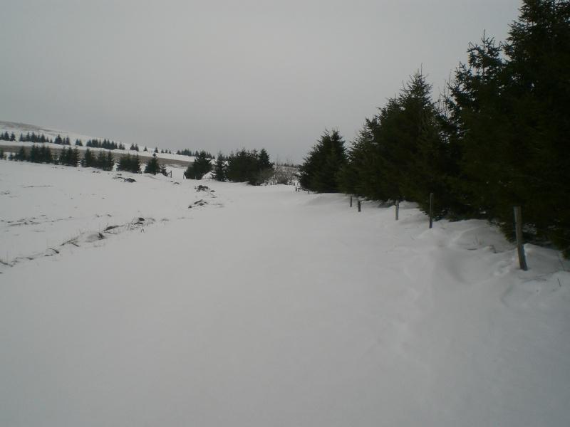 Le cézallier en Mars 2010 Cimg6732