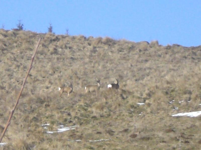 Le cézallier en Mars 2010 Cimg6834