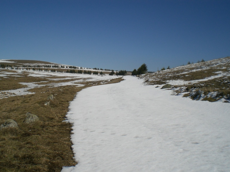 Le cézallier en Mars 2010 Cimg6838