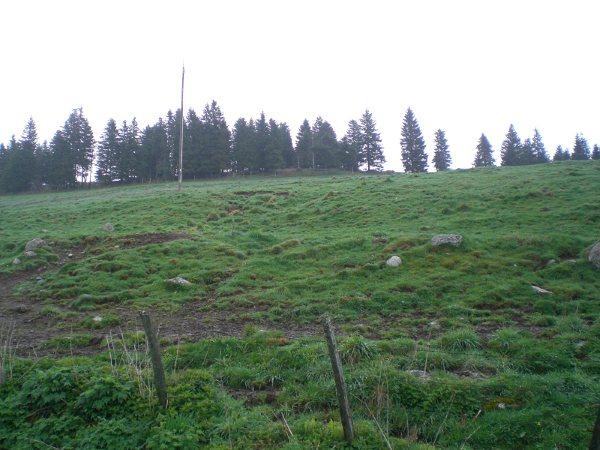 Le cézallier en Mai Cimg7018