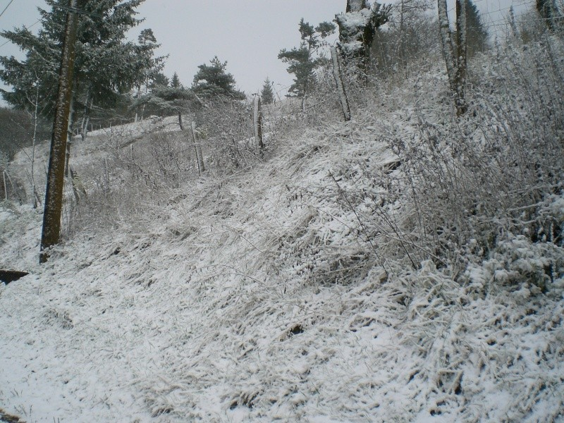 Le Cézallier en Octobre et Novembre 2010 Cimg8234