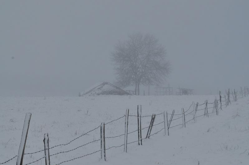 Février 2011 du coté d'Allanche Dsc_1119