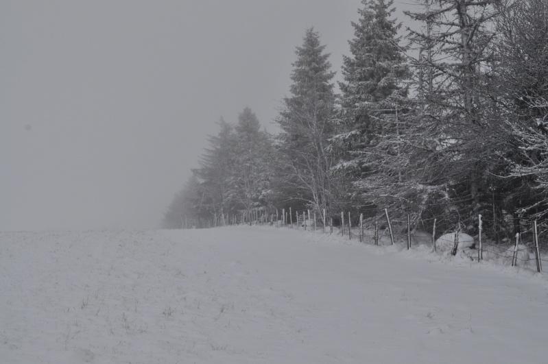 Février 2011 du coté d'Allanche Dsc_1122