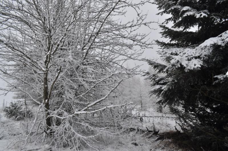 Février 2011 du coté d'Allanche Dsc_1123
