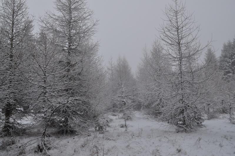 Février 2011 du coté d'Allanche Dsc_1125