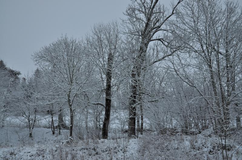 Février 2011 du coté d'Allanche - Page 2 Dsc_1417